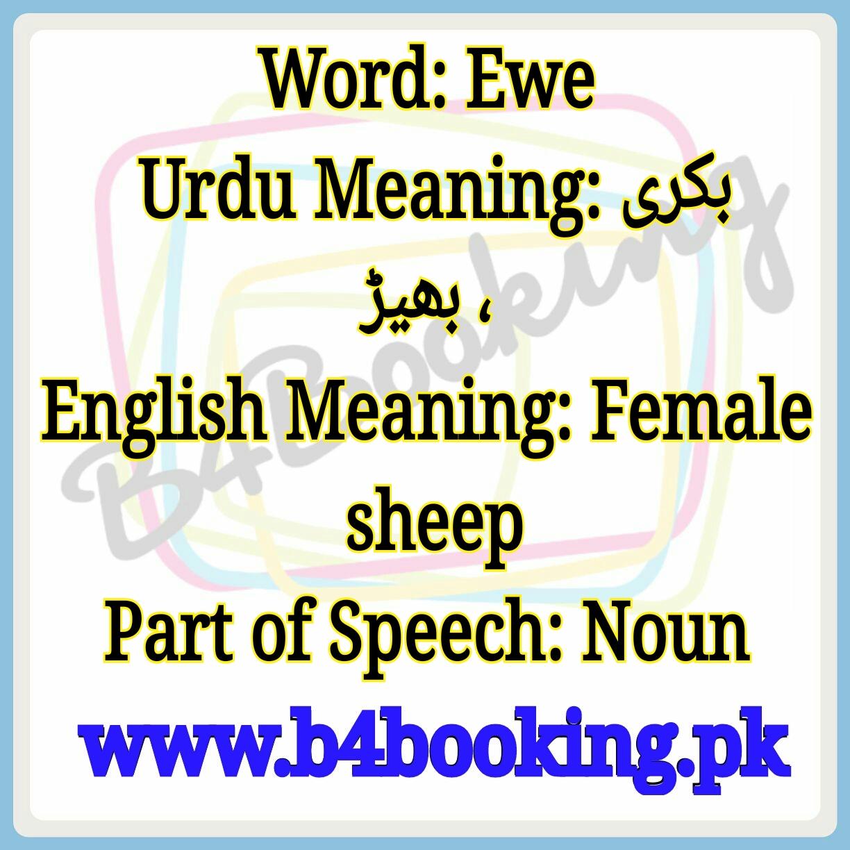 Ewe Meaning In English and Urdu Ewe Pronounciation